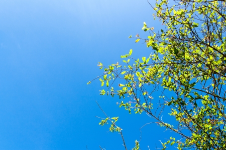 green leaves frame on blue sky Stock Photo - 23067162