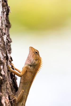 tree marigold: Golden dragon on the tree marigold