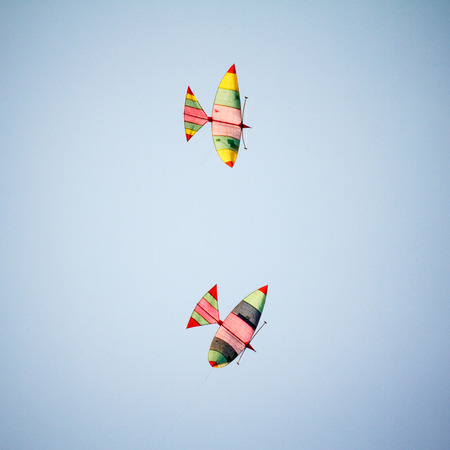 Kites on blue sky in the evening photo