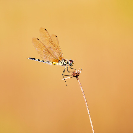 Dragonfly on grass and brown background. Stock Photo