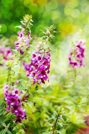 descriptive colours: Forget me not flower background.