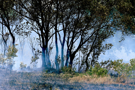 blasting: Forest fires in the daytime : flame, smoke, ash, trees and sky. Stock Photo