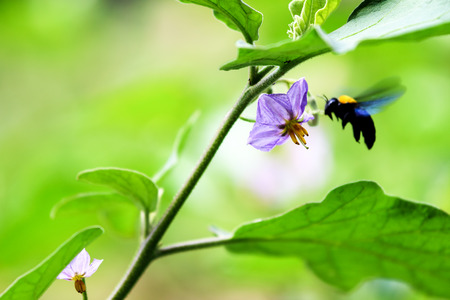 submissiveness: eggplant purple flowers and insect was flying.