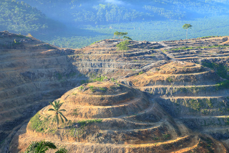 oil palm: Agricultural areas For planting oil palm