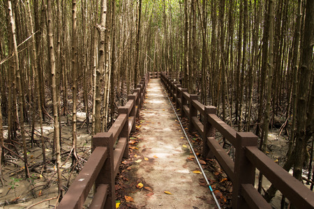 unwanted flora: Mangrove trees in Nature Park of Thailand.