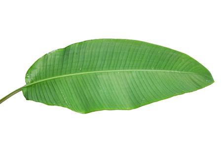 Bananenblad op een witte achtergrond.