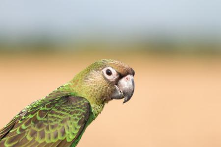 crimson colour: Parrot  in the evening