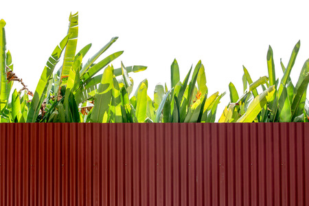 rust red: Zinc fence and green leaf on a white background