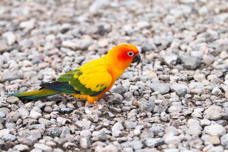 crimson colour: Parrot on the ground in the evening.