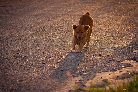 Motion blur Dog exercise, the light from the sunset.