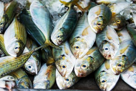 Fresh Mackerel Fish Seafood Market Traditional in Thailand.