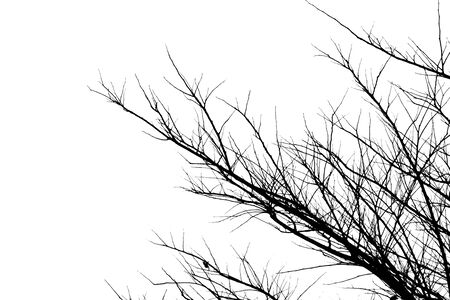 Dry twigs on the white sky background. 스톡 콘텐츠