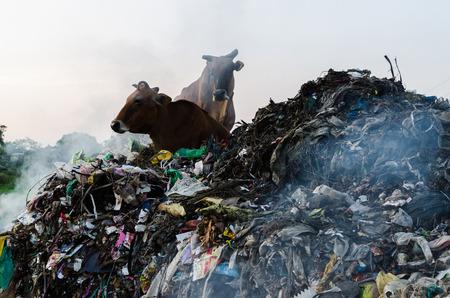 degradation: environment degradation Stock Photo