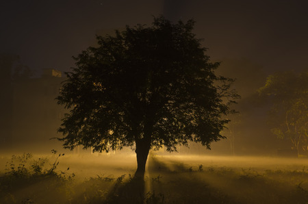 tree  shadow: winter foggy night Stock Photo