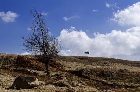 barren land: Arid and barren land