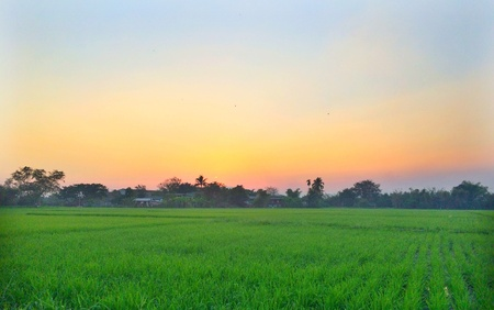 ricefield: Sunset at the ricefield