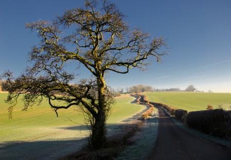 english countryside:  Single road leading through the English countryside Stock Photo