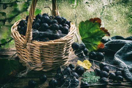 Raw black currant in basket