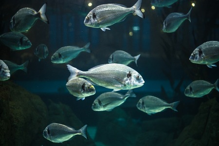 sea life centre: Exotic fishes in an aquarium.