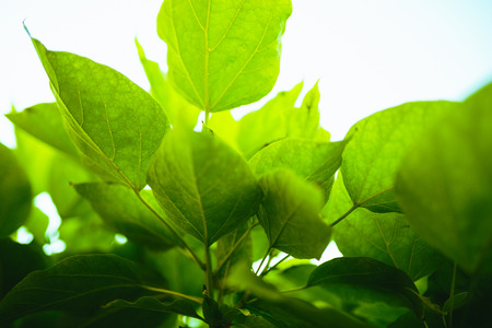 selective focus: Fresh green leaves and selective focus.