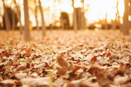 Falling Autumn Leaves,