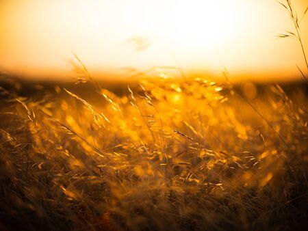 Grass Flowers Sunset Stockfoto