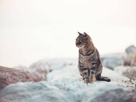 A domestic cat sitting on stones Фото со стока