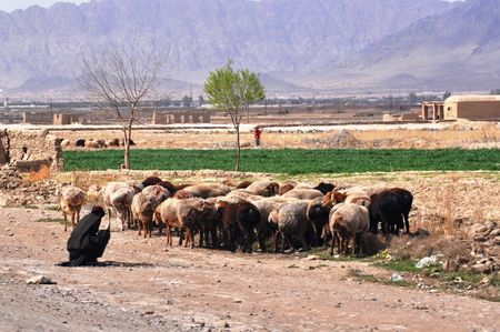 sheperd: Sheep and Goats in Afghanistan Stock Photo