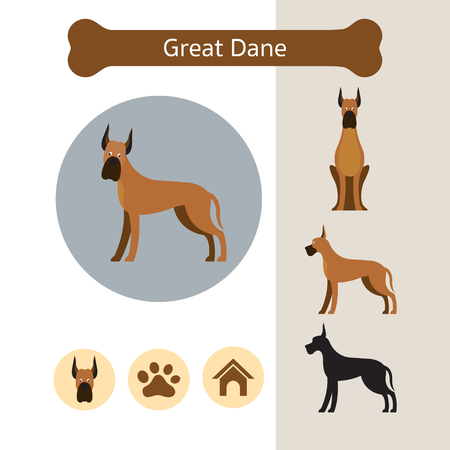 Great Dane Dog Breed Infographic, Illustration, Front and Side View, Icon