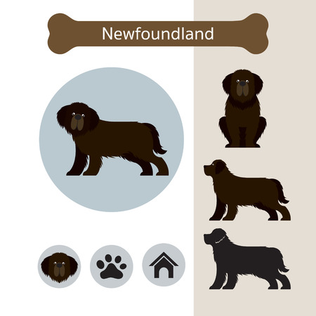 Newfoundland Dog Breed Infographic, Illustration, Front and Side View, Icon