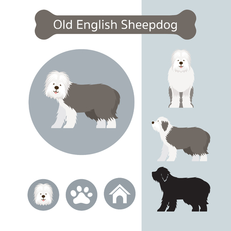 Old English Sheepdog Dog Breed Infographic, Illustration, Front and Side View, Icon