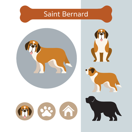 Saint Bernard Dog Breed Infographic, Illustration, Front and Side View, Icon