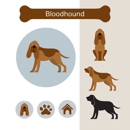 Bloodhound Dog Breed Infographic, Illustration, Front and Side View, Icon