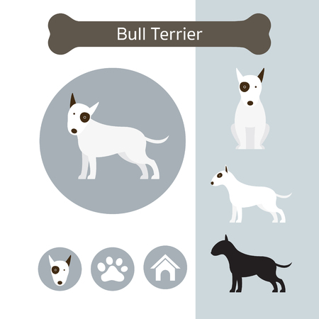 Bull Terrier Dog Breed Infographic, Illustration, Front and Side View, Icon
