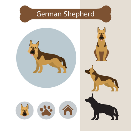 German Shepherd Dog Breed Infographic, Illustration, Front and Side View, Icon Illustration