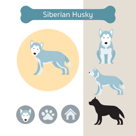 Siberian Husky Dog Breed Infographic, Illustration, Front and Side View, Icon