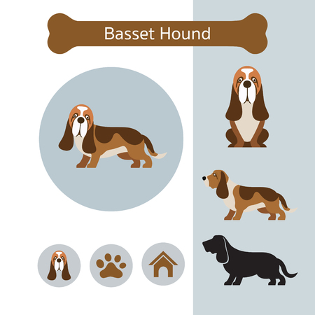 Basset Hound Dog Breed Infographic, Illustration, Front and Side View, Icon