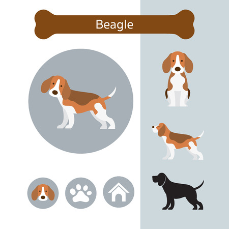 Beagle Dog Breed Infographic, Illustration, Front and Side View, Icon