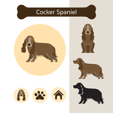 Cocker Spaniel Dog Breed Infographic, Illustration, Front and Side View, Icon