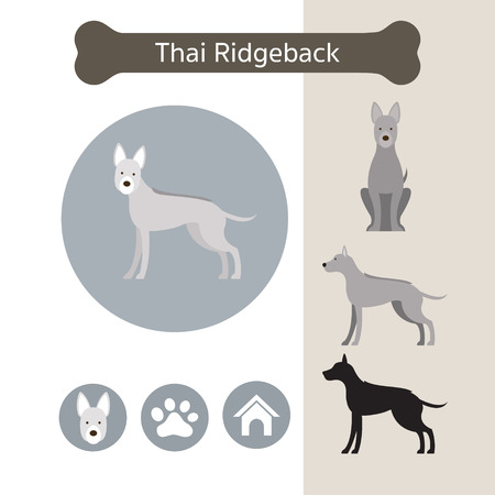 Thai Ridgeback Dog Breed Infographic, Illustration, Front and Side View, Icon