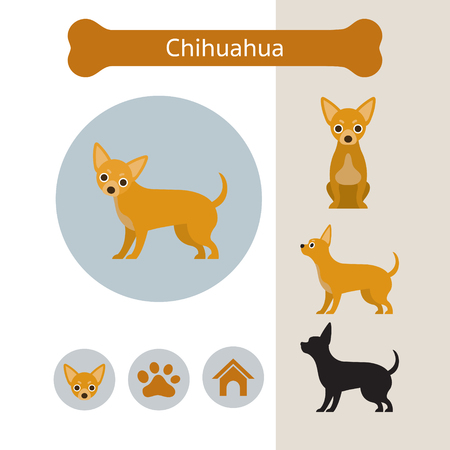 Chihuahua Dog Breed Infographic, Illustration, Front and Side View, Icon