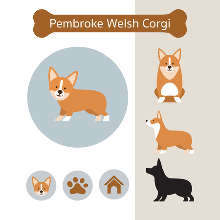 Pembroke Welsh Corgi Dog Breed Infographic, Illustration, Front and Side View, Icon