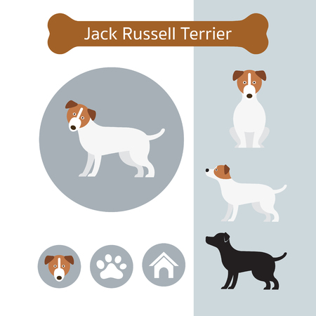 Jack Russell Dog Breed Infographic, Illustration, Front and Side View, Icon