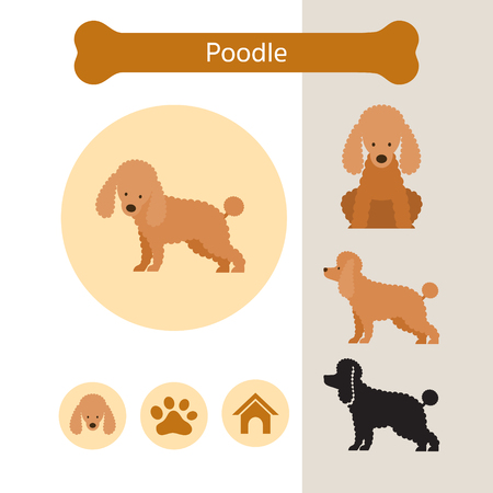 Poodle Dog Breed Infographic, Illustration, Front and Side View, Icon Ilustracja