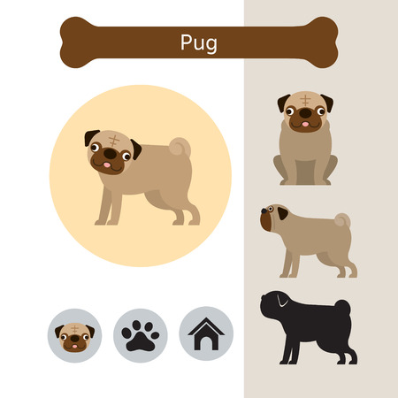 Pug Dog Breed Infographic, Illustration, Front and Side View, Icon Illustration