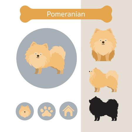 Pomeranian Dog Breed Infographic, Illustration, Front and Side View, Icon