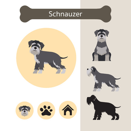 Schnauzer Dog Breed Infographic, Illustration, Front and Side View, Icon