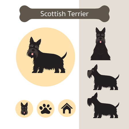 Scottish Terrier Dog Breed Infographic, Illustration, Front and Side View, Icon