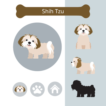 Shih Tzu Dog Breed Infographic, Illustration, Front and Side View, Icon