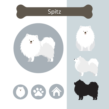 Spitz Dog Breed Infographic, Illustration, Front and Side View, Icon Vettoriali